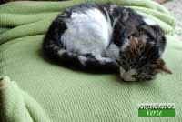 influence des perturbations telluriques sur le chat
