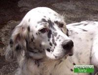 infuence ondes telluriques sur le chien