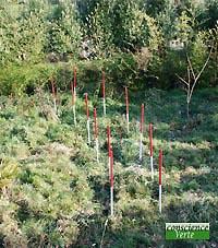 tracé eau souterraine par géobiologue