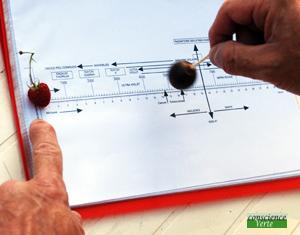 recherche radiesthésique valeur énergétique framboise après cueillette