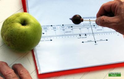 recherche radiesthésique valeur énergétique pomme après cueillette